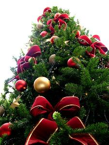 Albero di Natale - Matera