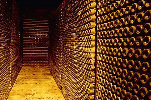 Cantina di vini