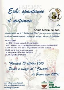 Erbe spontanee d'Autunno - Matera
