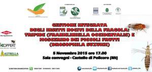 GESTIONE INTEGRATA DEGLI INSETTI NOCIVI DELLA FRAGOLA: TRIPIDE - 5 Novembre 2015 - Matera