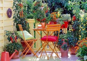 Criteri di scelta delle piante per avere fioriture tutto l'anno - Matera