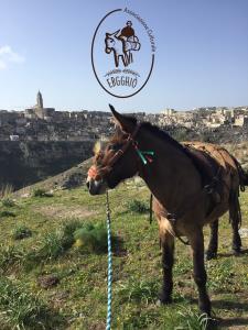Il mulo Bricco - Matera