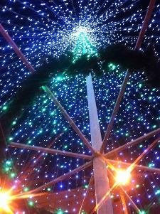 La foto è stata realizzata in Piazza Vittorio Veneto a Matera sotto uno degli alberi che decorano la città.