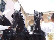 Matera p.zza S.Francesco 2 Luglio 2010 Cavalli che trainano la carrozza per la SS.Maria della Bruna