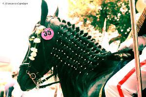 L'accuratezza del cavallo che rispecchia la passione e la devozione del suo cavaliere