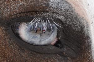 Foto di Francesco Morelli. I riflessi della festa nell'occhio del cavallo numero 22 destra