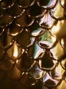 Particolare della corazza di un Cavaliere con riflesso delle luminarie - Via Annunziatella - 2 Luglio