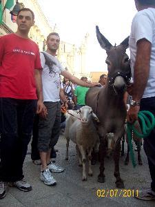 NOME DEL FOTOGRAFO:CENTONZE DANIELE;  LUOGO: VIA RIDOLA-MATERA (MT);  DATA DELLO SCATTO:02/07/2011.