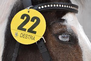 Foto di Francesco Morelli. L'occhio del cavallo diventa uno spettacolare specchio che riflette le immagini della festa.