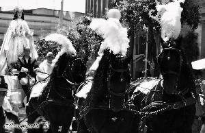 La maestosa ed elegante carrozza che trasporta la Madonna verso la Chiesa di Piccianello Armaiuoli Brunella