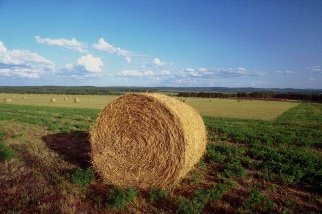 Agricoltura - balla di fieno