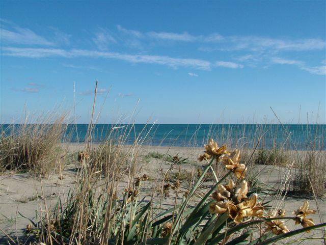 la spiaggia di Scanzano Jonico (foto Martemix)