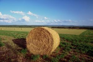 Agricoltura - balla di fieno - Matera