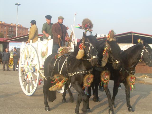 Alla fiera dei cavalli di verona successo degli allevatori for Fiera di verona