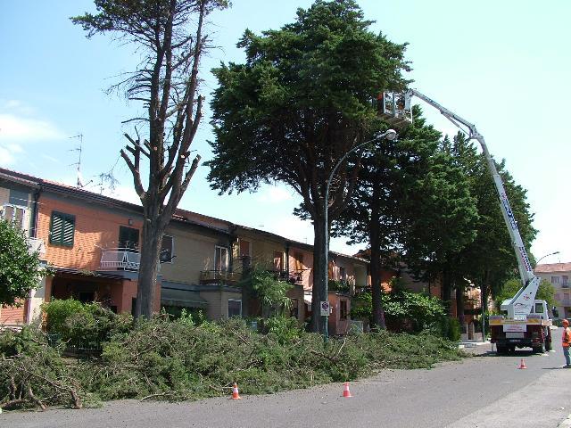 L´abbattimento degli alberi a Lanera (foto Martemix)