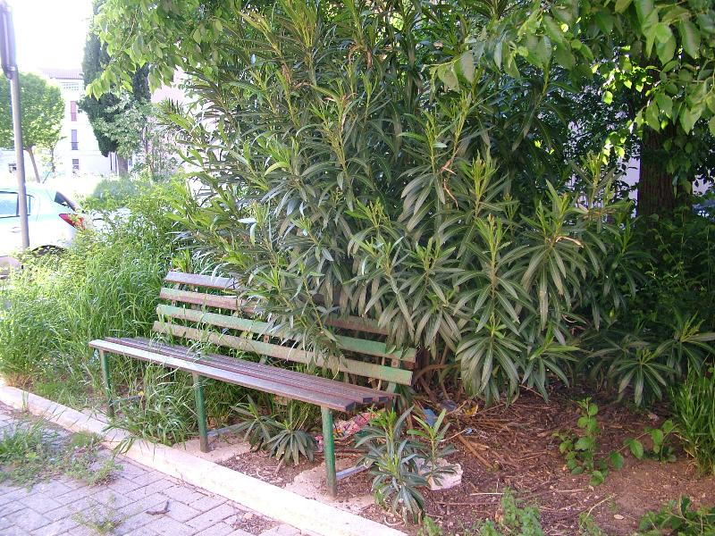 Panchina invasa dalle erbe (foto Martemix)