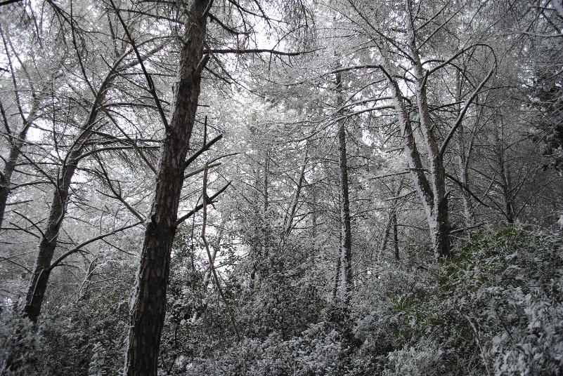 Emergenza neve - 6 gennaio 2012 (foto SassiLand)