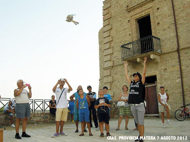 Liberazione di falchi grillai - 7 agosto 2012