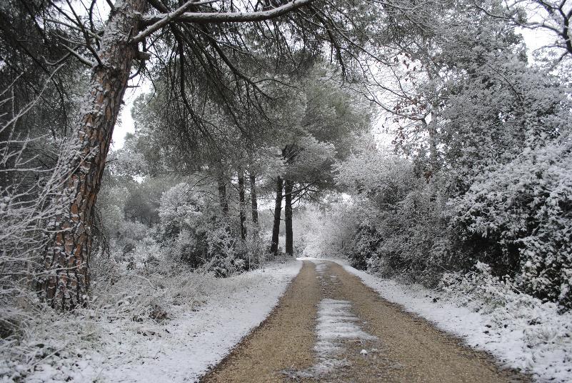 Neve a Matera - 06 febbraio 2012 (foto Gianni Cellura)