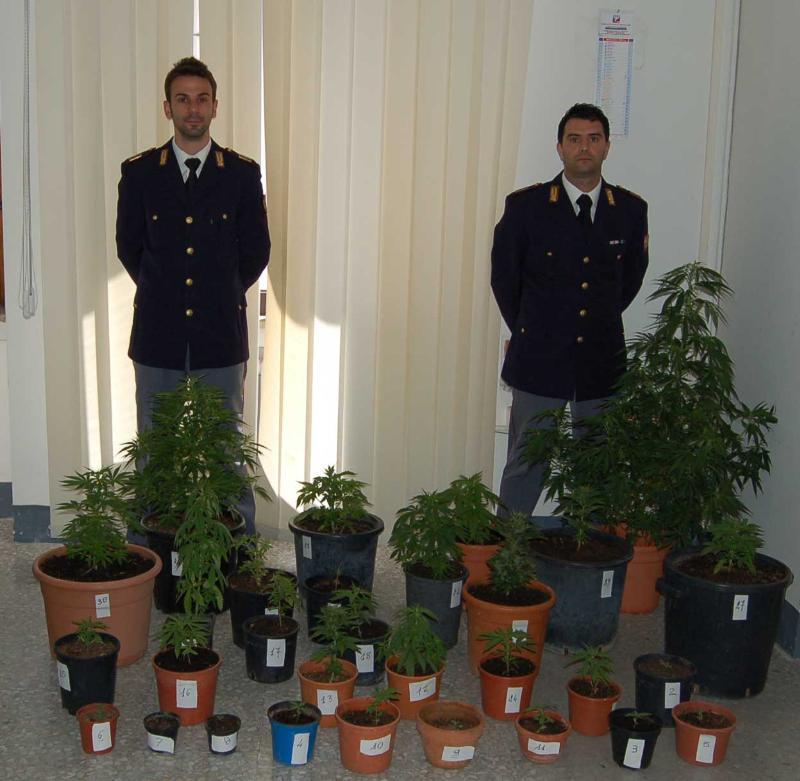 Piantine di marijuana sequestrata a Pisticci - 21 maggio 2012