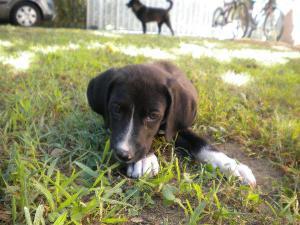 Cucciolo di cane adottato - Matera