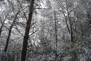 Emergenza neve - 6 gennaio 2012 (foto Gianni Cellura) - Matera