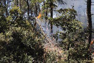 Incendio nel bosco - Matera