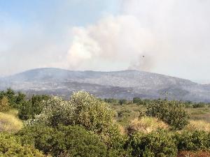 Incendio nel Bosco di Lucignano (foto Salvatore Adduce) - 28 agosto 2012  - Matera