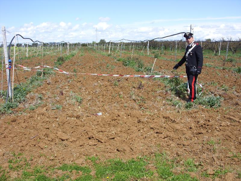Policoro, Carabinieri ritrovano 400 piante di albicocche rubate
