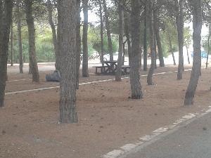 Bonifica della pineta di via Catone a Policoro