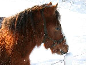 Cavallo - Matera