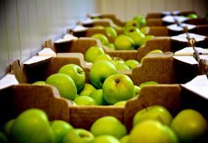 Frutta - Matera