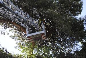 Albero diroccato rischia di cadere sulla statale Appia - 5 aprile 2013 (foto SassiLand)