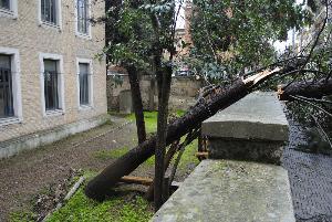 Via Pasquale Vena, alberi caduti a seguito della tromba d´aria. I Vigili del fuoco li rimuovono - 21 gennaio 2013 (foto SassiLand)