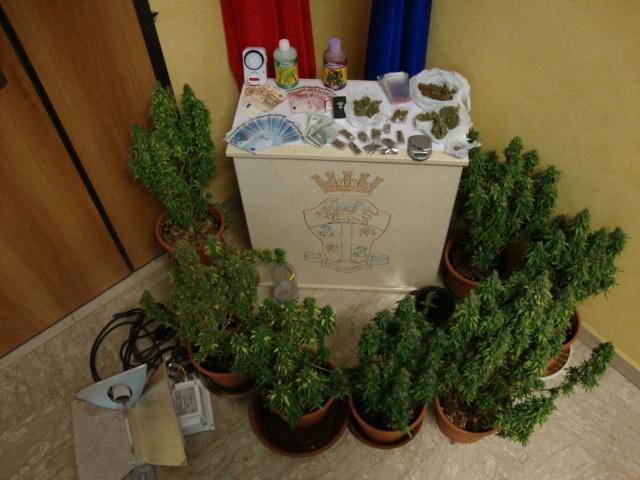 Coltivazione domestica di marijuana sequestrata dai Carabinieri di Matera