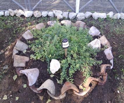 Nasce il giardino degli odori a pomarico cultura - Il giardino degli esperidi ...