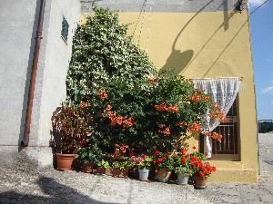 L'angolo fiorito - Oliveto Lucano - Matera