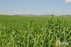 Natura, verde (foto SassiLand) - Matera