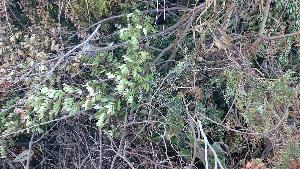 Tagli di alberi e macchia mediterranea al lido di Policoro