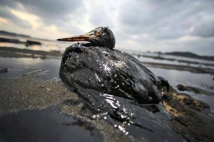Disastro BP nel Golfo del Messico (foto internet)