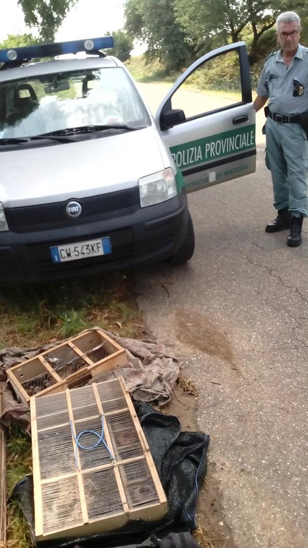 Le gabbie rinvenute dalla Polizia Provinciale
