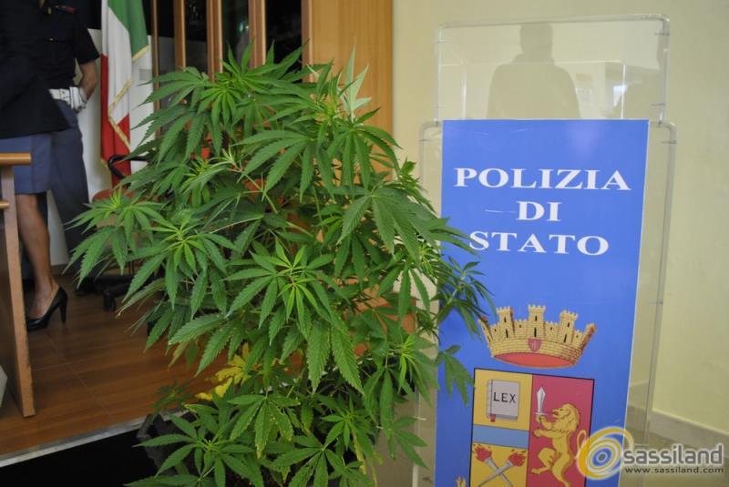 Una delle 14 piante di marijuana rinvenute a Tinchi (Pisticci) -  (foto SassiLand)