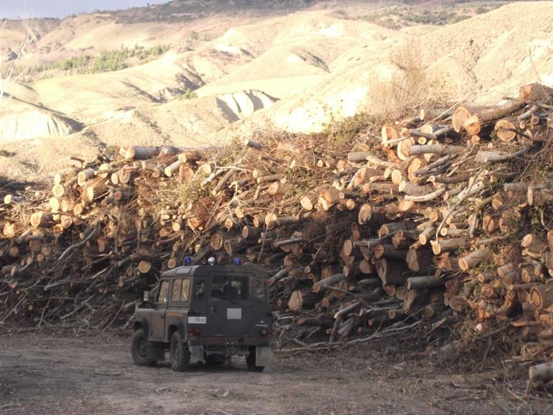 Legna sequestrata dal Corpo Forestale dello Stato