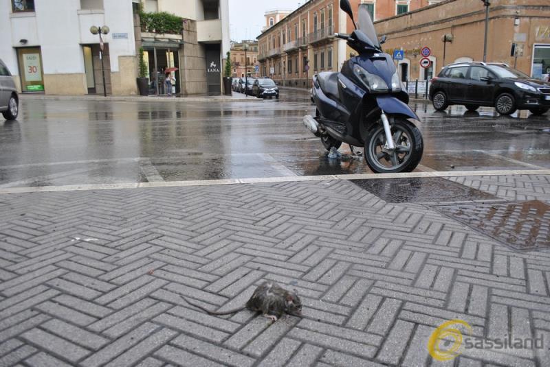 Ratto a Matera, foto di repertorio