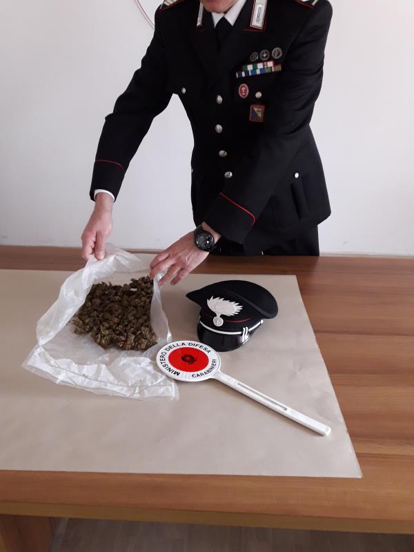 La marijuana rinvenuta dai Carabinieri di Nova Siri